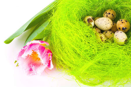 Tulip and nest with easter eggs photo