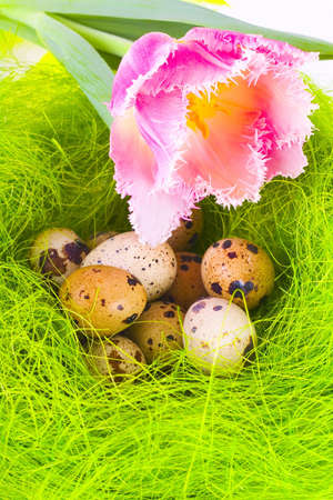 Nest with easter eggs and tulip photo