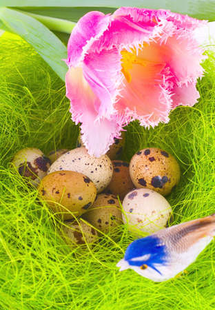 Nest with easter eggs, tulip and bird photo
