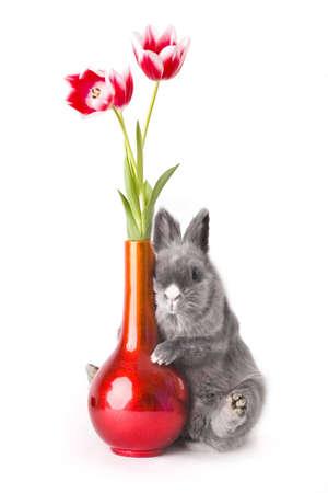midget:  bunny hugging a vase with tulips Stock Photo