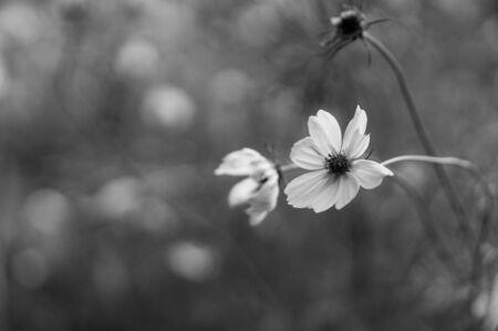 Black and White Flower Macro