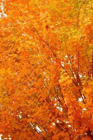 yellows: The Yellows Of Autumn
