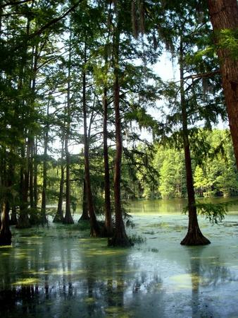 沼の木 写真素材