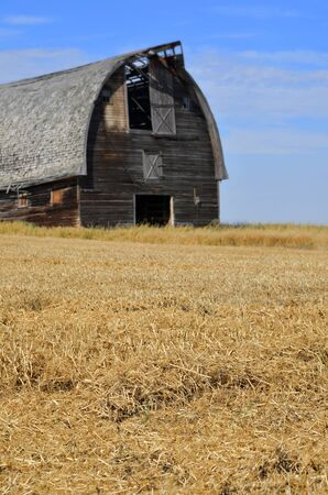 run down: An image of an old run down barn in a yellow hay field. Stock Photo