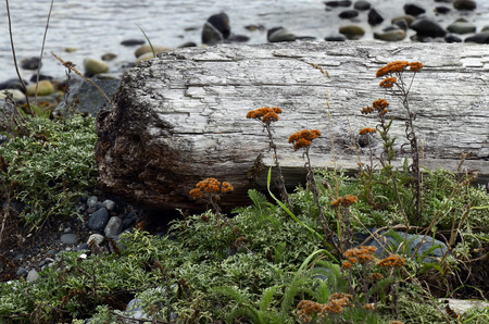 An image of an old piece of rotten driftwood with orange wildflowers.