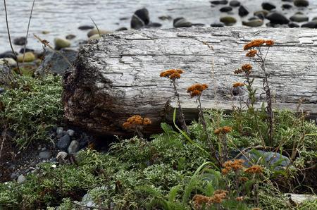 fiori di campo: L'immagine di un vecchio pezzo di legno marcio con fiori d'arancio.