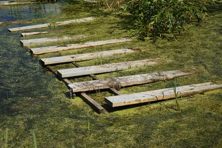 Contaminated Swamp Water Stock Photo