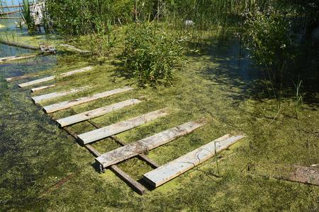 Contaminated Swamp