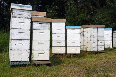Wooden Honeybee Hives