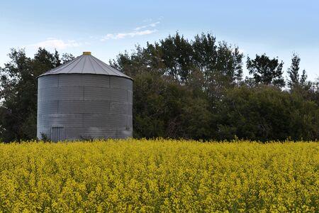 silos: Grain Bin and Canola Field