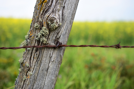 wire fence: Old Fence Post and Barbed Wire