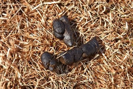 Dog Poop Close Up