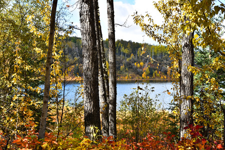 Scenic Lake View in Autumn