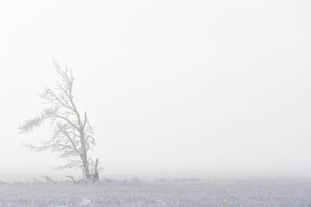 Lonely Foggy Tree