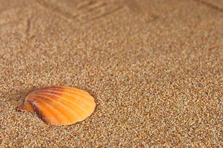 Seashells and Sand Background