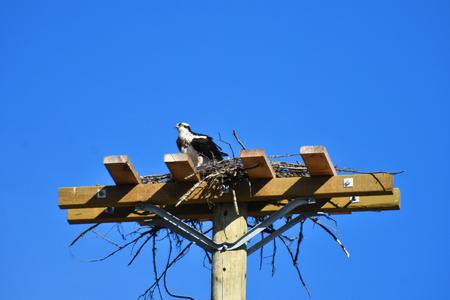 Eagle and Eagle Nest