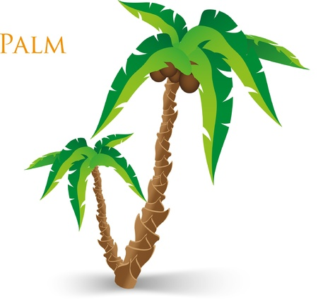 Vector illustration of the palm tree Vector
