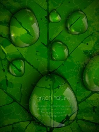 leaf water drop: dew drops on green leaves Illustration