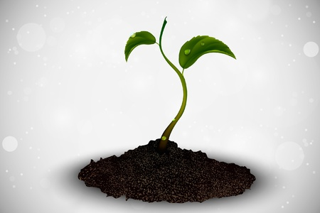 graft: green sprout grows out of the ground Illustration