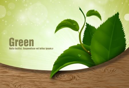 green leaves of the wood Stock Vector - 18419813