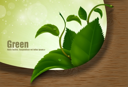 green leaves of the wood Stock Vector - 18419733