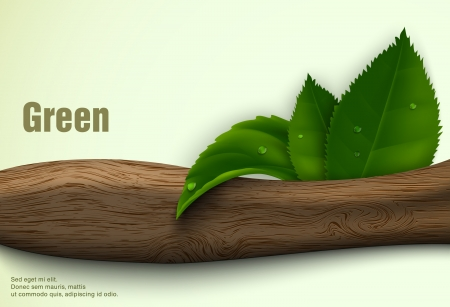 green leaves of the wood Stock Vector - 18419734