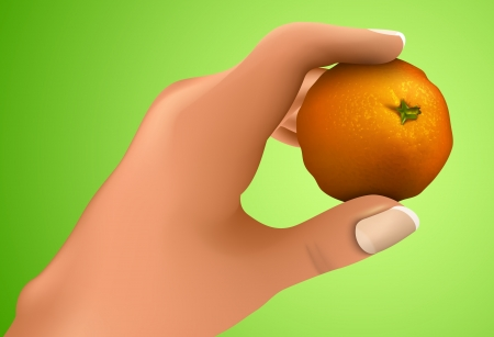 vesicles: Mandarin in the hand, the hand holding citrus Illustration