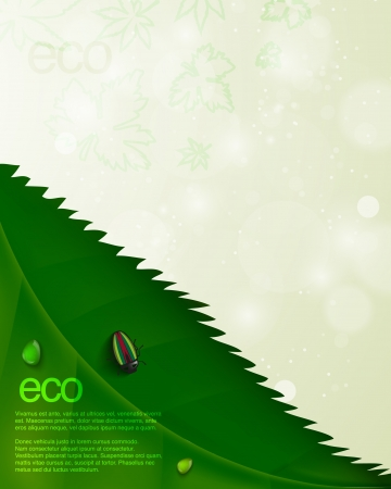 Ecological background with leaf and beetle Vector