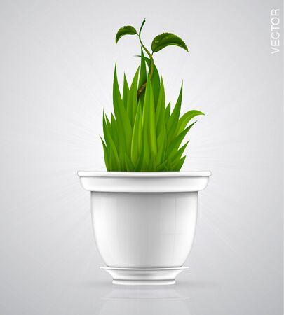 green sprout, flower, herb in the pot, porcelain pot Illustration
