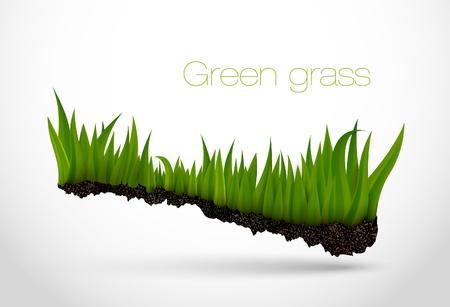 wawe: Green grass