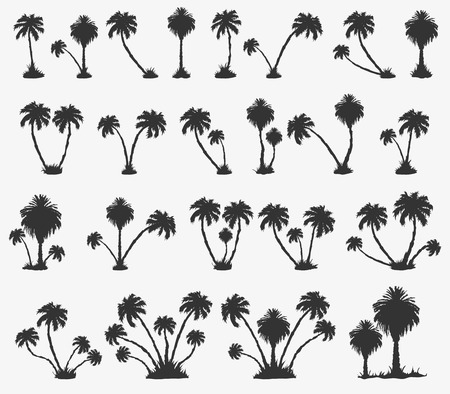 palm tree isolated: set of solar palm beach in a dark color