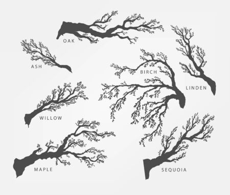 twigs: set of branches, twigs of different trees in black