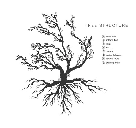 root: general structure of a tree with a description of the elements