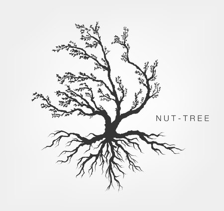 black tree: hazel tree on a white background with leaves and root system