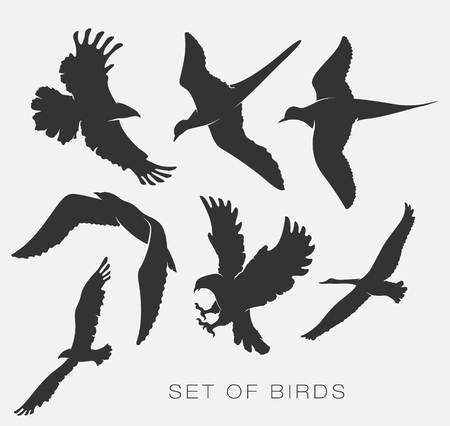set of silhouettes of birds