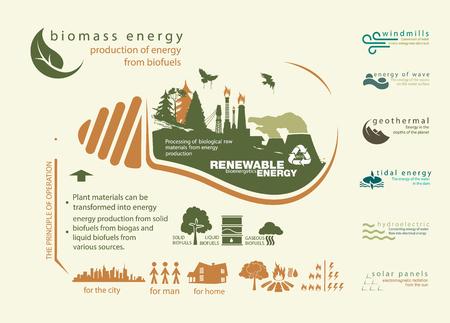 infographics hernieuwbare bron van energie en werking van biomassa