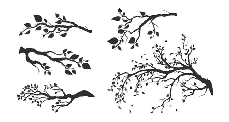 tree branches with leaves isolated Illustration