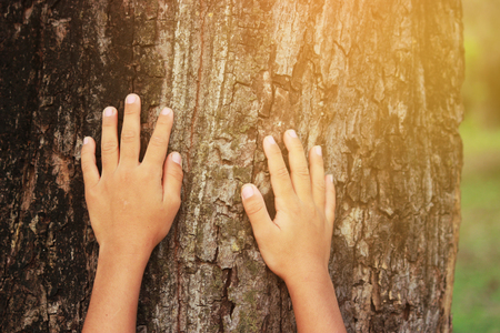 placed on the trunk of a big tree with fingers extended, symbolizing the connection between humans and nature. 스톡 콘텐츠 - 97331010