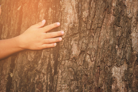 placed on the trunk of a big tree with fingers extended, symbolizing the connection between humans and nature. 스톡 콘텐츠 - 97317063