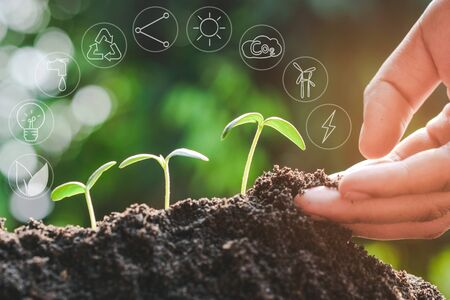 Seedling growing from fertile soil with icons about environment on image , Concept of environmental conservation and protection of our world sustainable. Banco de Imagens