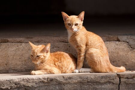 Two cute domestic short hair cats Rest On the cement floor Stock Photo - 17832491