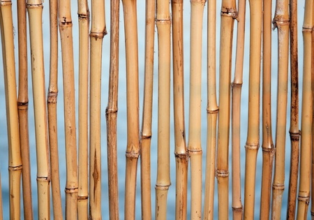 Bamboo background texture with columns of wood