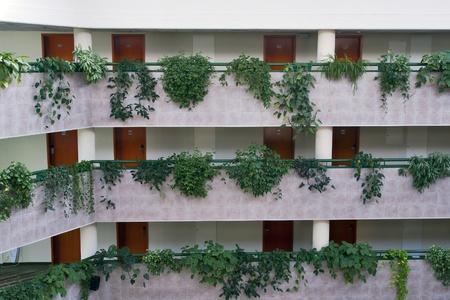 Empty hotel corridors with room doors and vegetation photo