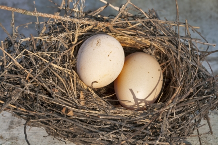 Bird's nest with two eggs Stock Photo - 15952554