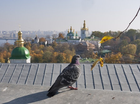 Pigeon against Kiev landscape with Vydubichi monastery and Pechersk Lavra photo