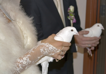 White pigeons in hands of a just married couple photo