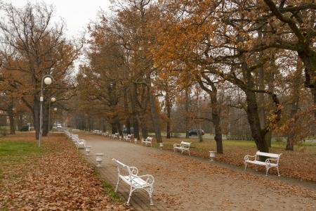 有名な温泉地カルロヴィ ・ ラーズニェ、チェコ共和国の白いベンチで秋の公園