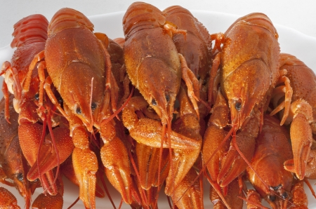 red cooked crawfish pile closeup on white plate Stock Photo - 18338401