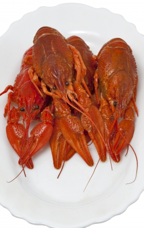 red cooked crawfish group closeup on white plate photo