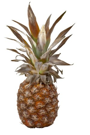 whole overripe pineapple isolated on a white background photo